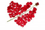4634892-cupid-arrow-in-a-red-rose-petals-heart-shape-love-symbol